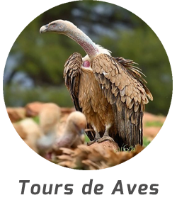 tours-aves